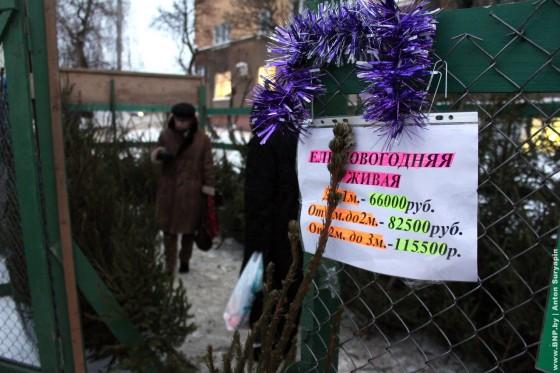 Elochniye-bazari-nachali-rabotat-v-Minske-09