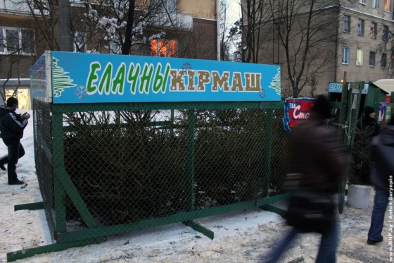 Elochniye-bazari-nachali-rabotat-v-Minske-10